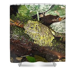 Vietnamese Mossy Frog Shower Curtain by Sara  Raber