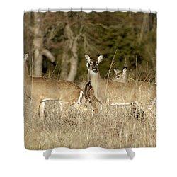 Vigilant White-tailed Deer Shower Curtain