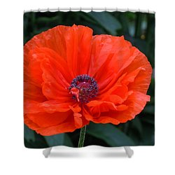 Shower Curtain featuring the photograph Village Poppy by Francine Frank