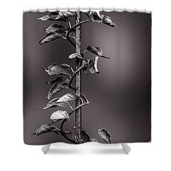Vine On Iron Shower Curtain by Bob Orsillo
