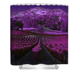 Vineyard 41 Shower Curtain