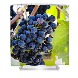 Vineyard Grapes Shower Curtain by Charmian Vistaunet