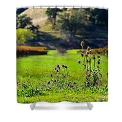 Vineyard Thistles Shower Curtain by CML Brown