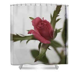 Vintage Antique Rose Shower Curtain