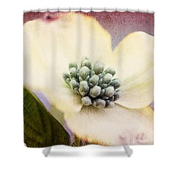 Shower Curtain featuring the photograph Vintage Dogwood Blossom by Trina  Ansel