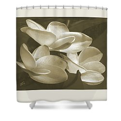 Vintage Plumeria Trio Shower Curtain