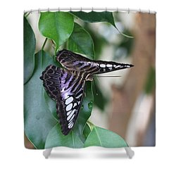 Violet Clipper Butterfly Shower Curtain