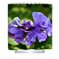 Violet Ruffles Shower Curtain by Susan Herber