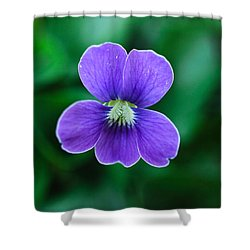 Violet Splendor Shower Curtain by Julie Andel