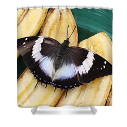 Violet-spotted Charaxes Butterfly Shower Curtain