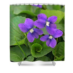 Violet Trio Shower Curtain
