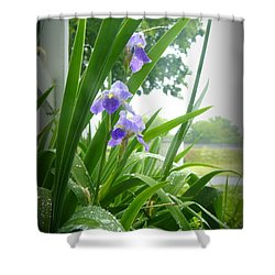 Shower Curtain featuring the photograph Iris With Dew by Laurie Perry