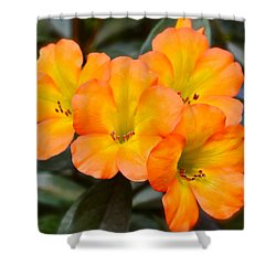 Vireya Rhododendron Shower Curtain by Venetia Featherstone-Witty