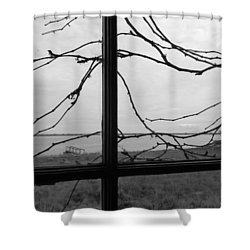 Shower Curtain featuring the photograph Virginia Creeper  by Cheryl Hoyle