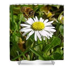 Visiting Miss Daisy Shower Curtain