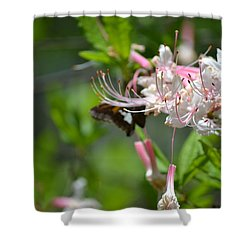 Shower Curtain featuring the photograph Visitor by Tara Potts