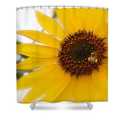 Shower Curtain featuring the photograph Vivid Sunflower With Bee Fine Art Nature Photography  by Jerry Cowart