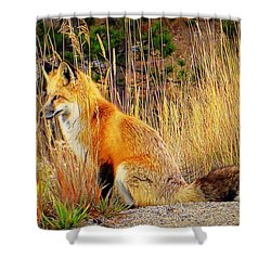 Shower Curtain featuring the photograph Vixen by Karen Shackles