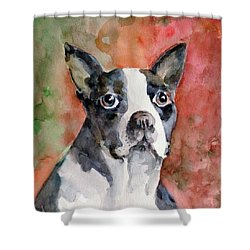 Shower Curtain featuring the painting Vodka - French Bulldog by Faruk Koksal