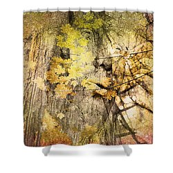 Shower Curtain featuring the photograph Her Forest by Kathy Bassett