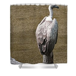 Vulture On Guard Shower Curtain