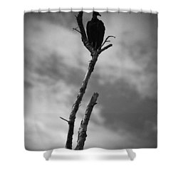 Vulture Silhouette Shower Curtain