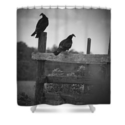 Vultures On Fence Shower Curtain by Bradley R Youngberg
