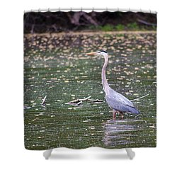 Shower Curtain featuring the photograph Wading Crane by Susan  McMenamin