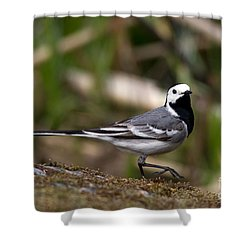 Wagtail's Step Shower Curtain by Torbjorn Swenelius