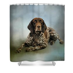 Waiting For A Cue - German Shorthaired Pointer Shower Curtain