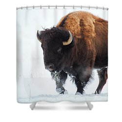 Waiting For Spring Shower Curtain by Jim Garrison