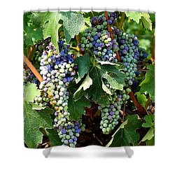 Waiting For Wine Shower Curtain by Carol Groenen