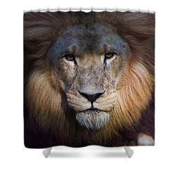 Waiting In The Shadows Shower Curtain