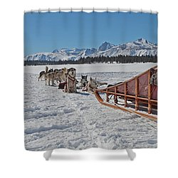 Waiting Sled Dogs  Shower Curtain by Duncan Selby