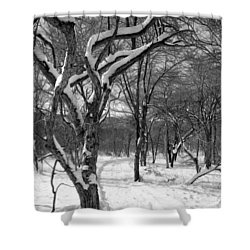 Walk In The Snow Shower Curtain