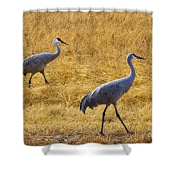 Walk This Way Shower Curtain by Mike Dawson