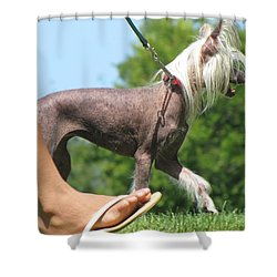Walking Along The Park Shower Curtain