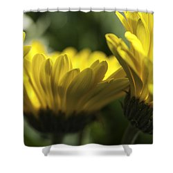 Wall Flowers Shower Curtain by Fran Riley