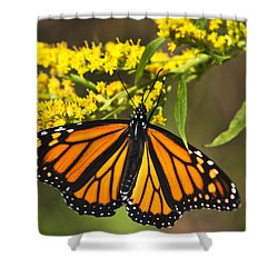 Wandering Migrant Butterfly Shower Curtain by Christina Rollo