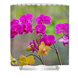 Warbler Posing In Orchids Shower Curtain