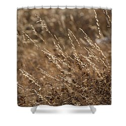 Warm Light On A Winter's Day Shower Curtain by Dee Cresswell