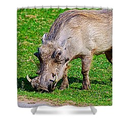 Warthog In Addo Elephant Park Near Port Elizabeth-south Africa  Shower Curtain