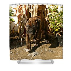 Shower Curtain featuring the photograph Was I Bad? by Carol Lynn Coronios