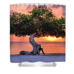 Watapana Tree - Aruba Shower Curtain