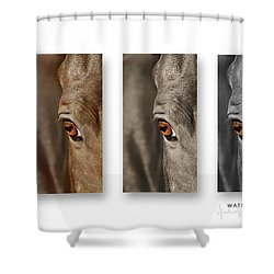 Watchful Triptych Shower Curtain by Michelle Twohig