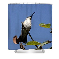 Watchful Female Hummingbird  Shower Curtain by Eunice Miller