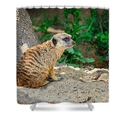 Watchful Meerkat Shower Curtain