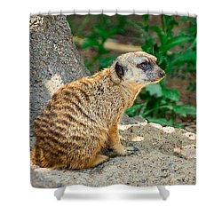 Watchful Meerkat Vertical Shower Curtain