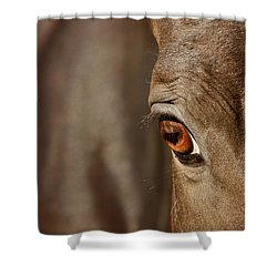 Watchful Shower Curtain by Michelle Twohig