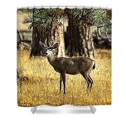 Watchful Young Buck Shower Curtain